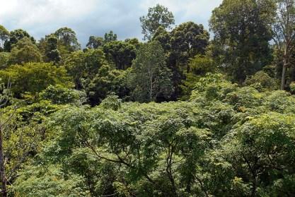 Sepilok - Rain Forrest