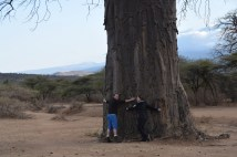 Mächtige Affenbrotbäume (Baubab)