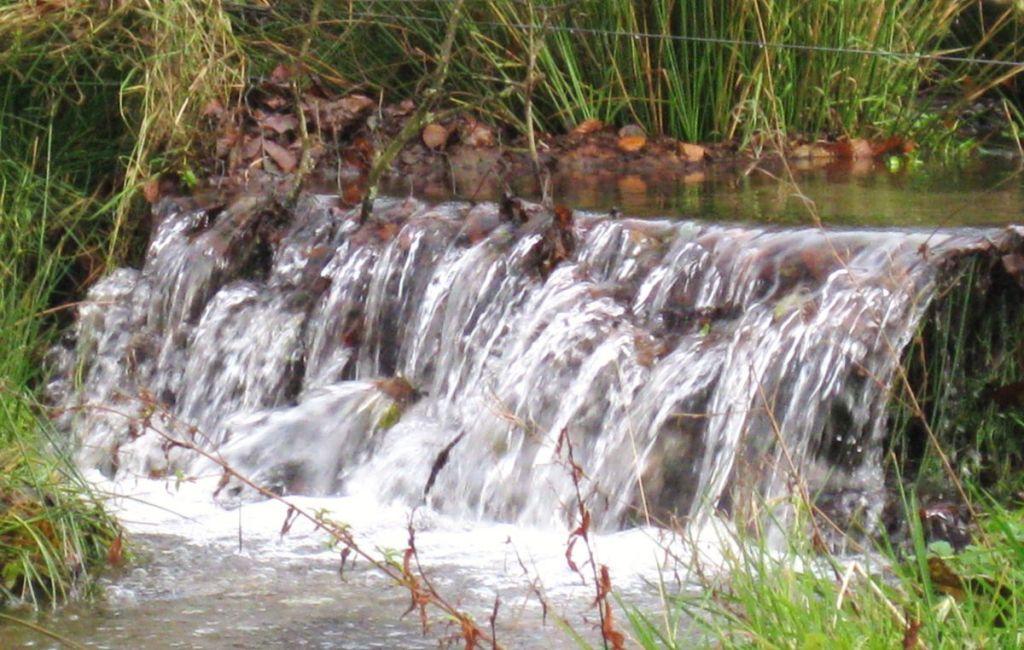 'Niagara Falls' - West Withy Farm
