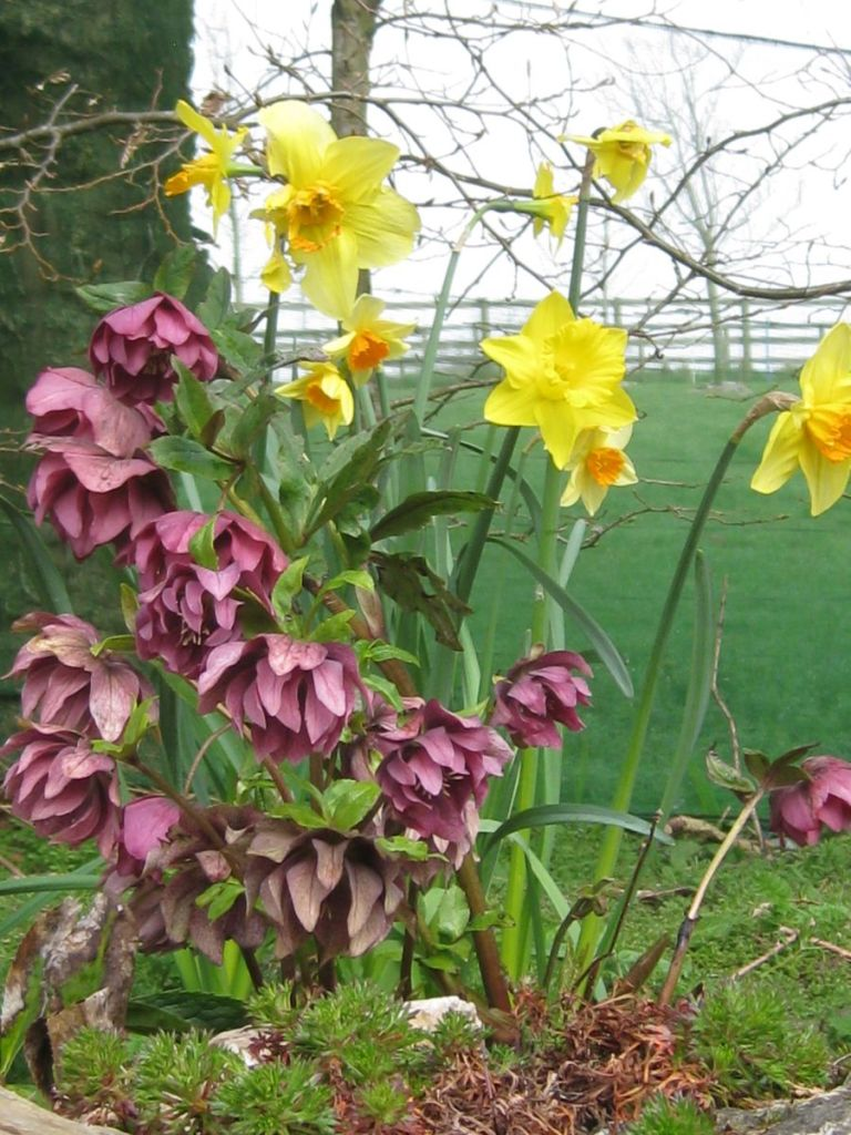 Spring flowers, West Withy Farm, Exmoor