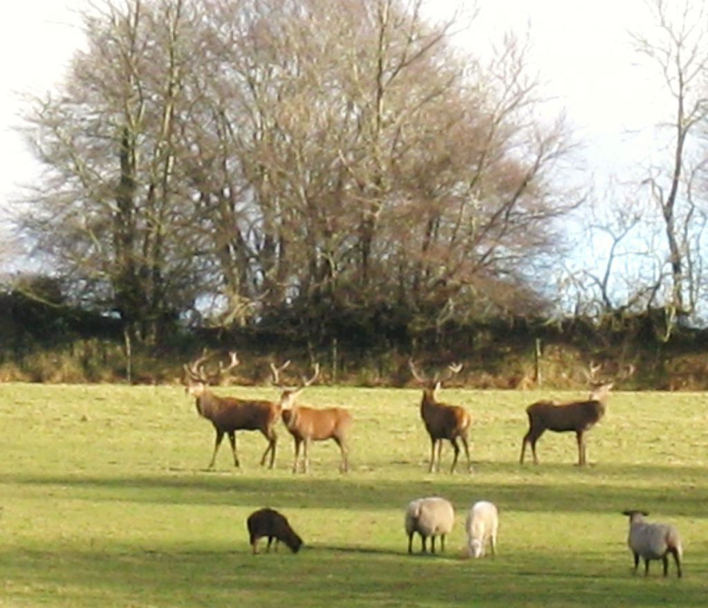 Stag party taken from Relaxation Area, West Withy Farm, looking east. March 2013