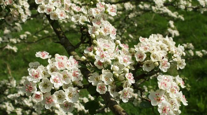 The wildflower garden campaign