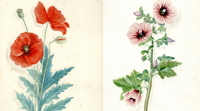 DISCOVER THE BOTANICAL DIARY OF A COUNTRY LADY AT BARNSTAPLE MUSEUM