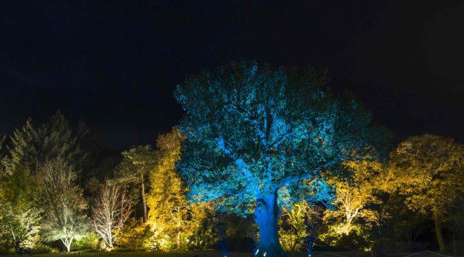 Book your tickets for Rosemoor Glow
