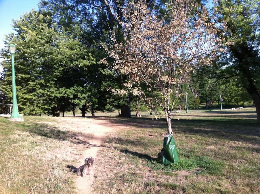 treegator and shadow