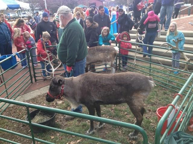 reindeer man.1