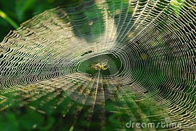 spider-center-web-15077574
