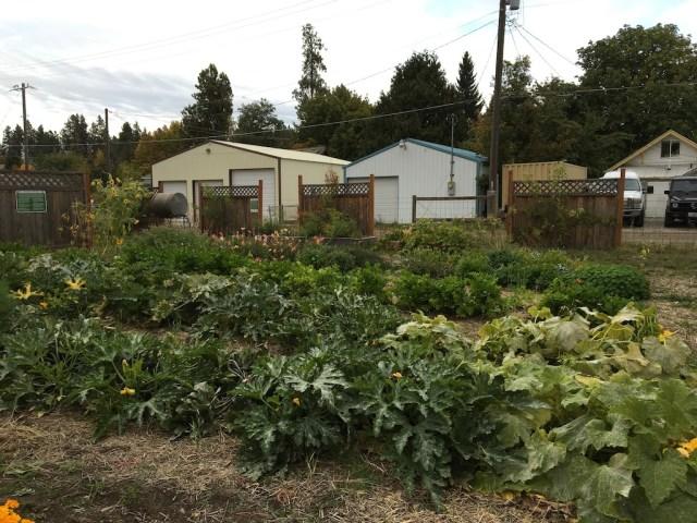 garden-shot-1-coerur-dalene