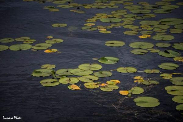 My Camera Diary, Exotic Washington, Lumaca Photo, Anselm Chong