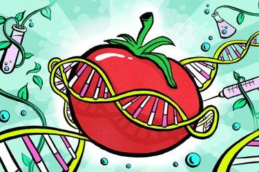 GMO in Croatia: Updated for 2021