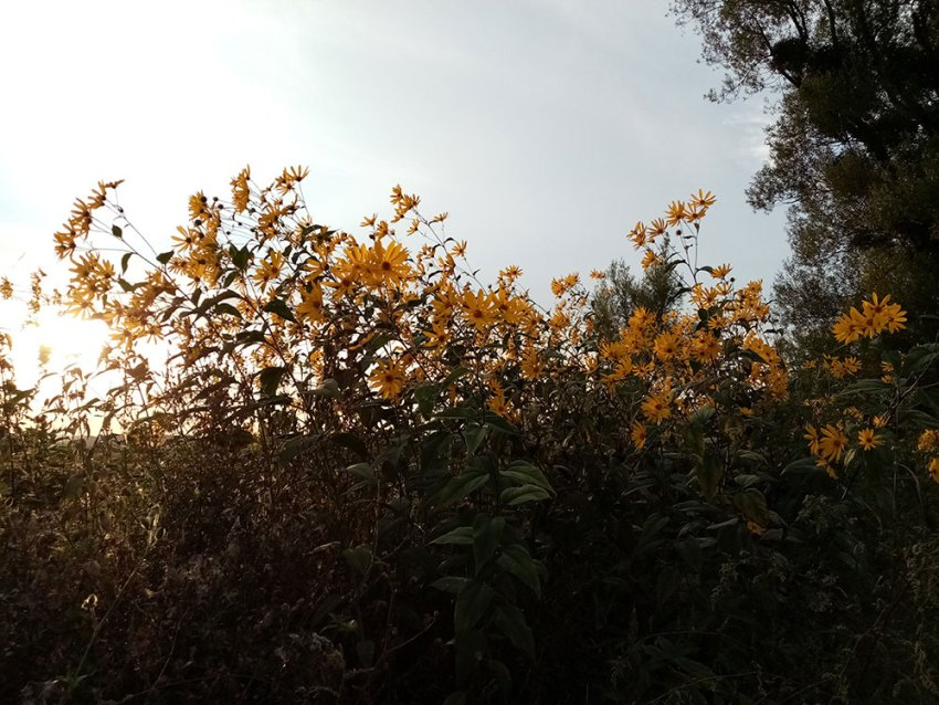 Wild flowers in Zagorje, Croatia