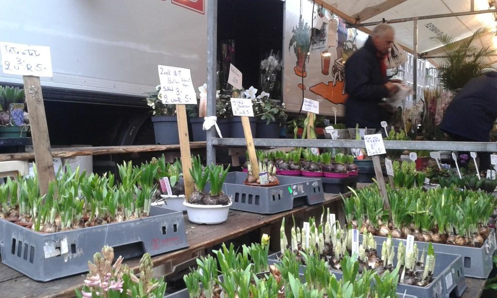 tulip bulbs amsterdam street market