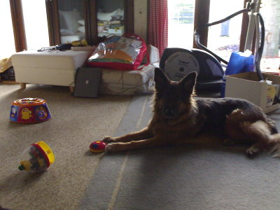 Lexi with 'her' new toy