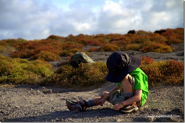 Clément a juste besoin de 2 caillous pour s'occuper pendant les visites.  Galapagos, Equateur.