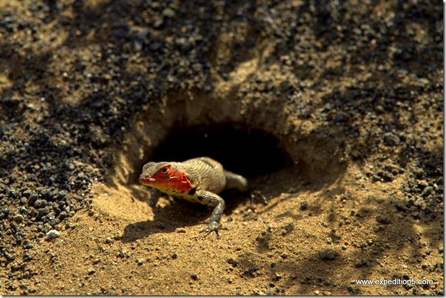 Coucou toi !  Galapagos, Equateur.
