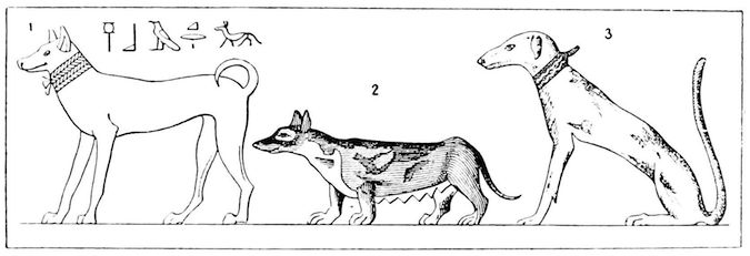 Ancient Egyptian Dogs - Types
