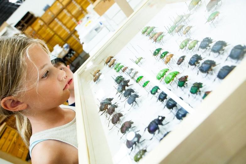 BioQuip Bugs
