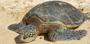 sea_turtle_02