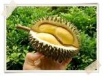 Durian - The King of Fruits!