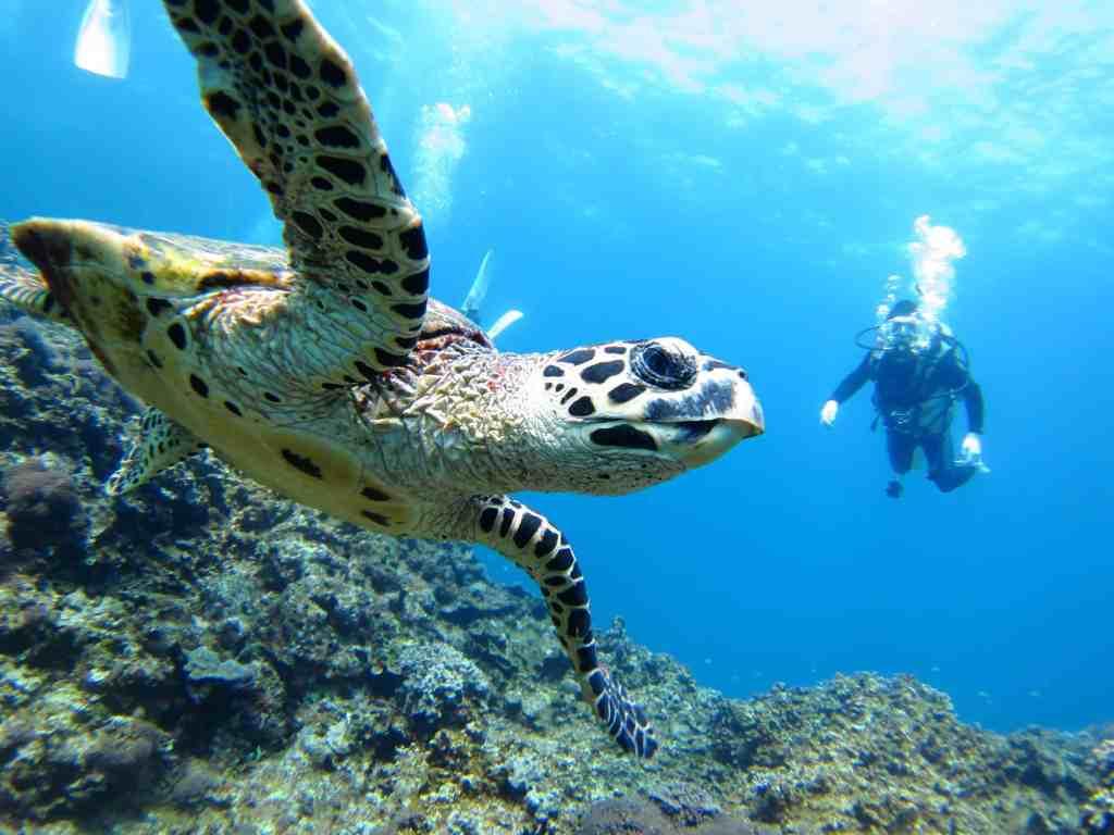 Turtle in Borneo