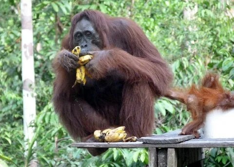Mum peeling bananas