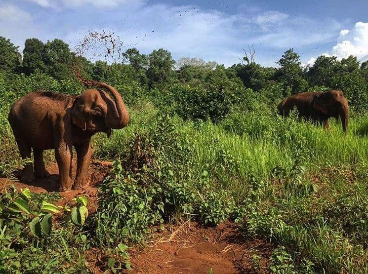 elephant-valley-project-mondulkiri