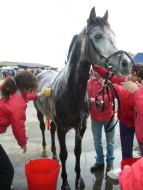 Pupilaje con Equus Boria en San Vicente de la Barquera en Cantabria