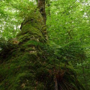 El Centro de Interpretación del Parque Natural de Oyambre