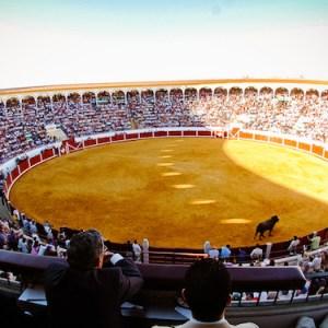 EL Coso de los Llanos en Pozoblanco