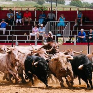 Visita a la ganadería brava de Torrestrella en la finca de Alburejos en Jerez de la Frontera