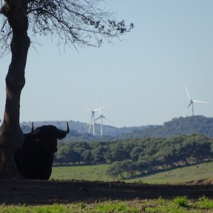 Visita guiada ganadería en la provincia de Cádiz