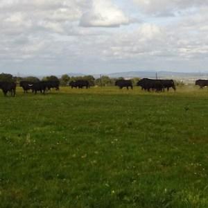 Visita guiada ganadería de toros en Extremadura