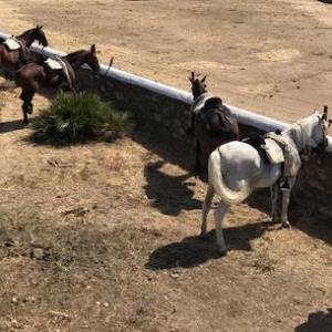 Visitas a caballo en Andalucía