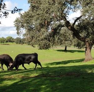 Visita ganadería en Huelva