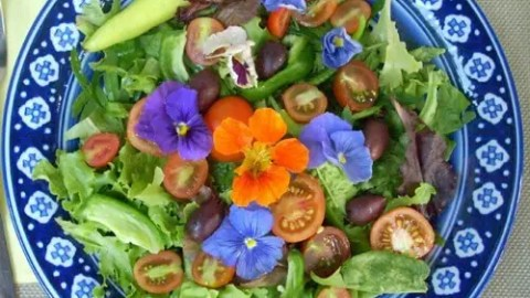 Growing Salad Greens in Texas during the Fall and Winter