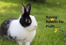 business plan for rabbit farming