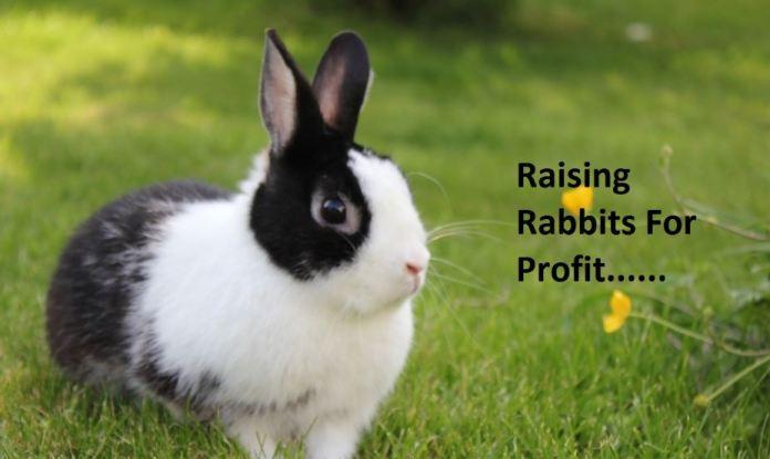 business plan for rabbit farming