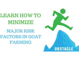 risk factor in goat farming