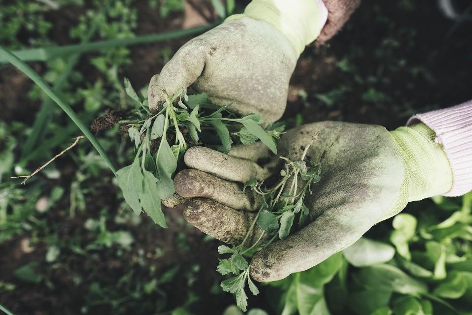 Gartenkralle für Unkraut
