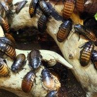 Insektenvernichter [test_und_vergleich]: die 5 besten Insektenvernichter