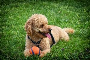 Kauspielzeug Hunde elektrisch