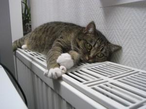 Fensterplatz für Katzen Heizung