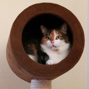Kratztonne Liegeposition der Katze