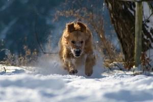 Leuchthalsband Hunde Schnee wasserdicht