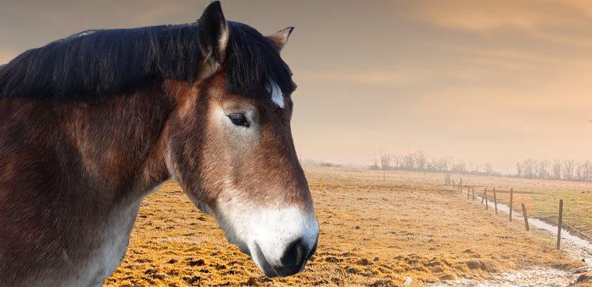 Pferdesalbe Test