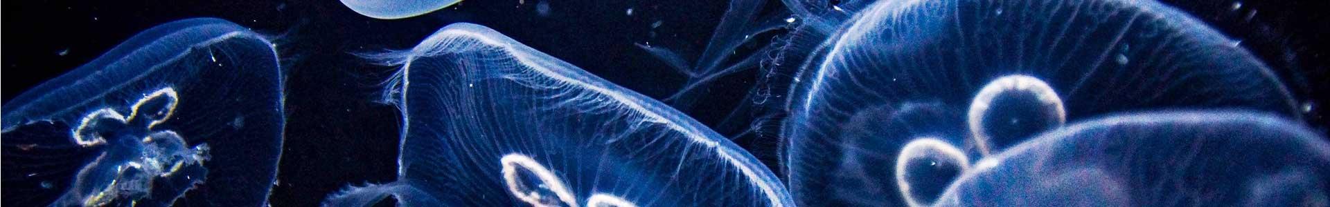 Aquaristik-Test