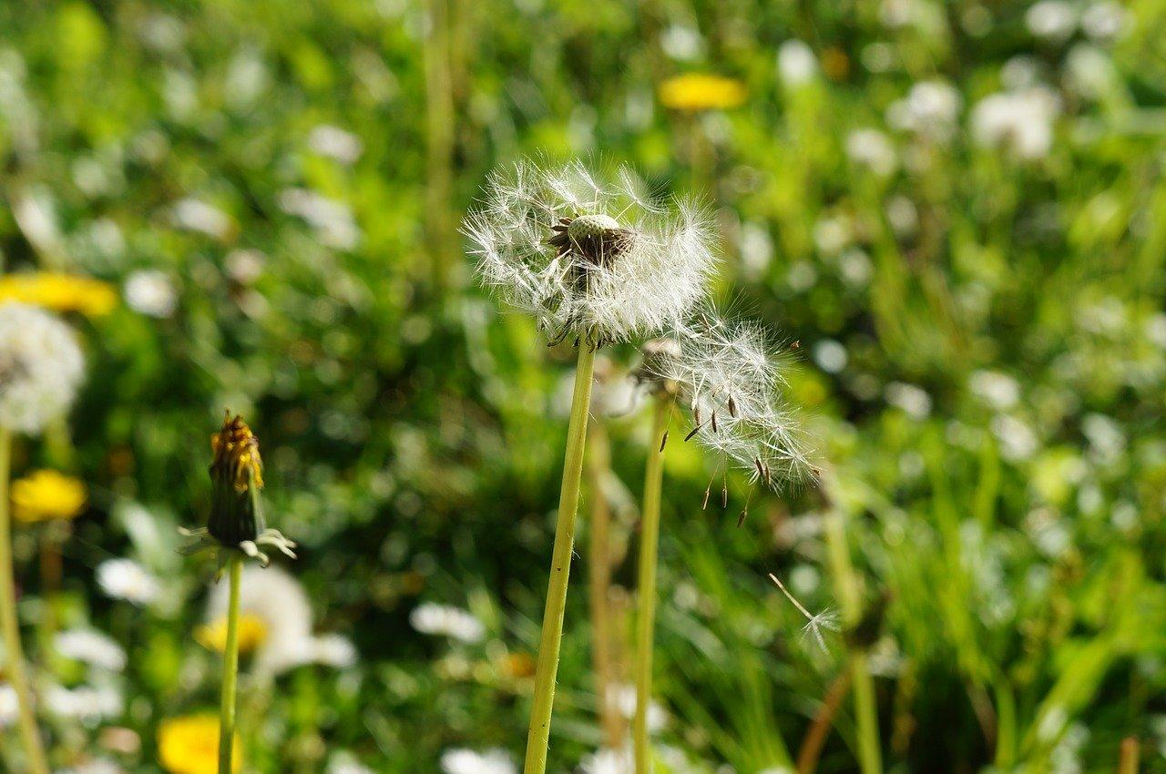 Gute Allergiker-Staubsauger entfernen auch Pollen zuverlässig aus Ihrem Haushalt.
