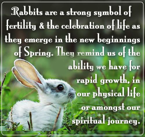 Rabbits For Fertility