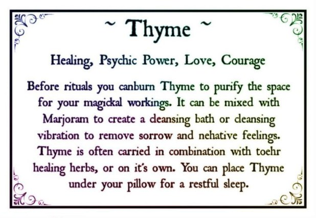 Thyme For Everything