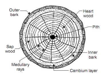 structure of wood